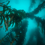 uk-aquaculture-business-unveils-seaweed-solution-to-address-climate-change